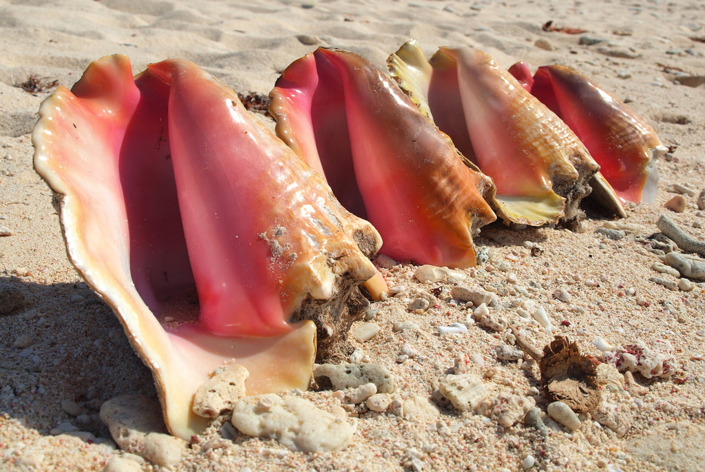 Conch Shells On The Beach Sailcloth Print