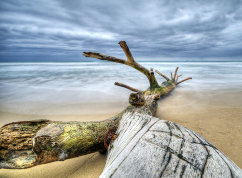 Driftwood Log On The Beach Vinyl Print