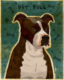 Brindle and White American Pit Bull Terrier Print