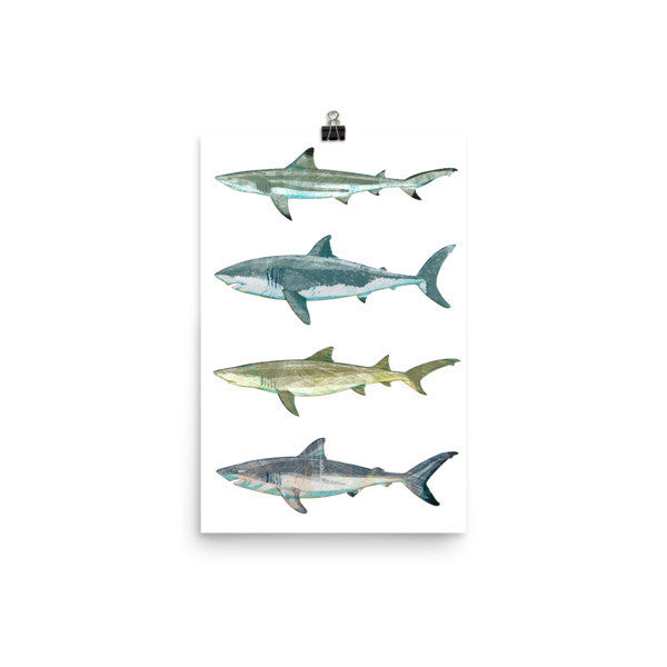 Shark Print by John W. Golden