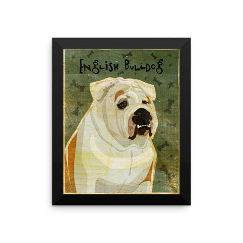 White and Tan English Bulldog Framed poster