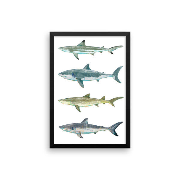 Shark Decor Poster by John W. Golden