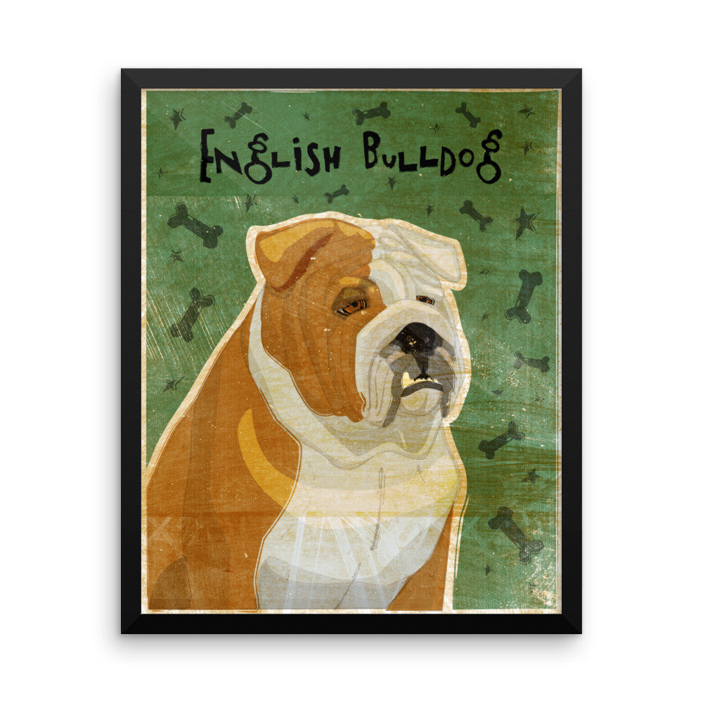 Tan and White English Bulldog Framed poster