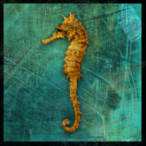 Urban Naturals Seahorse Photograph by John W. Golden