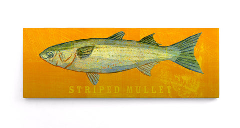 GOLDEN GREY MULLET Fishing Fish Art Print Picture Present For Sea Angler NEW