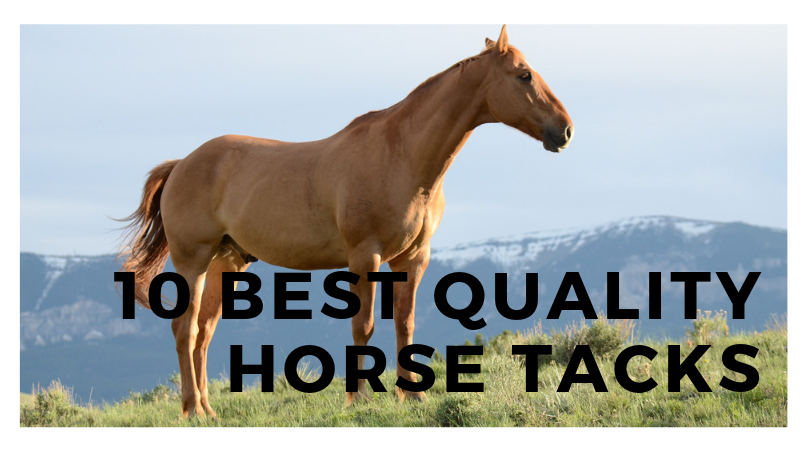 10 Best Quality Horse Tacks for Horse Riding-Bridles & Reins