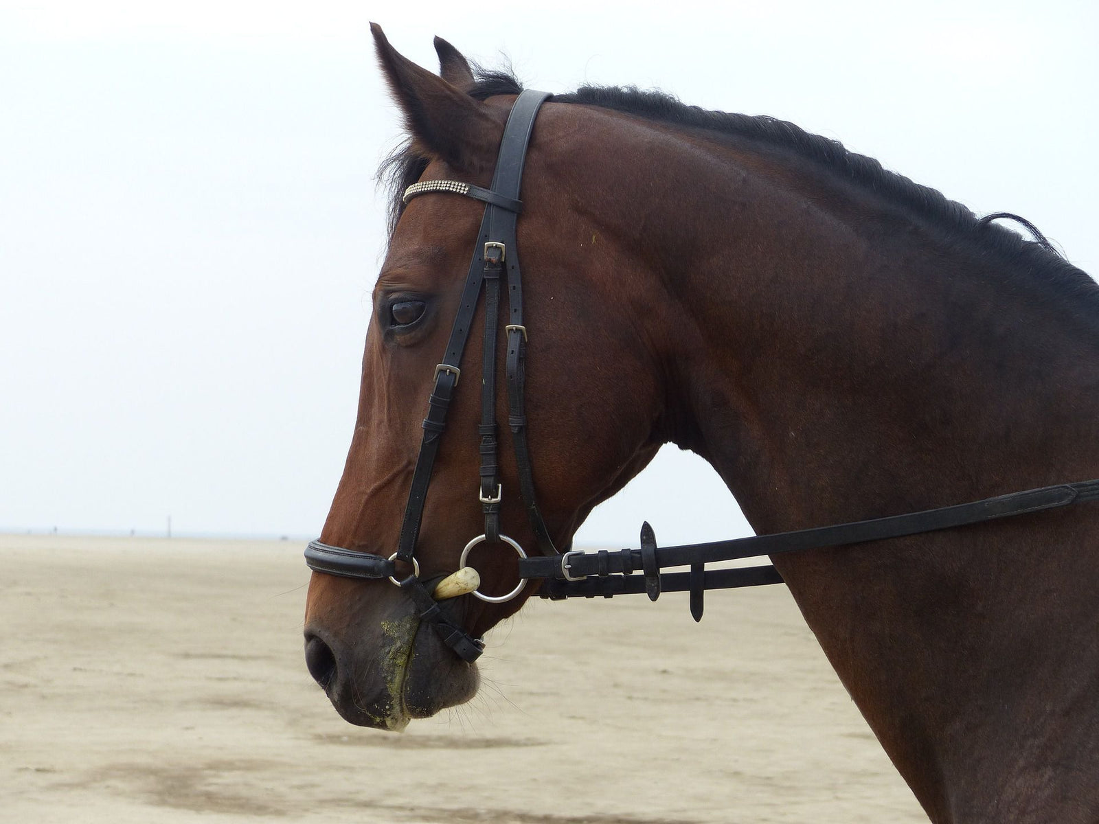 Know Everything About Horse Bridles Bridles Reins