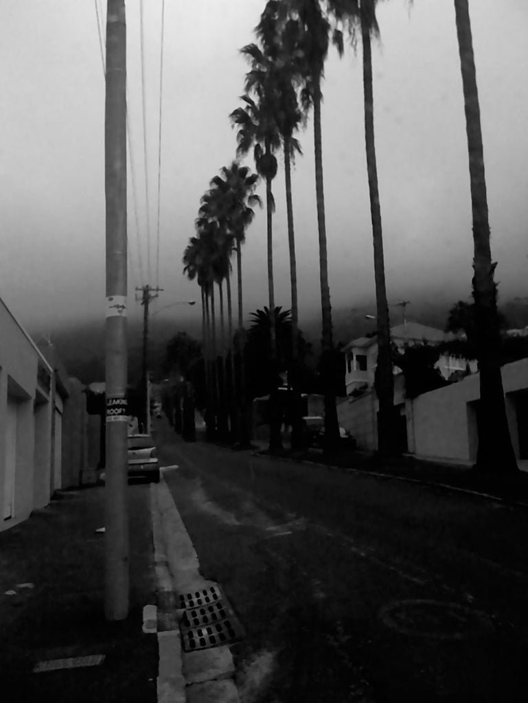 Tall Palm Trees - Lost in Cape Town by Joachim Host - The White Wall Project Fine Art Photography Shop - 2