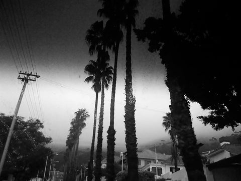 Black Palm Trees - Lost in Cape Town by Joachim Host - The White Wall Project Fine Art Photography Shop - 3