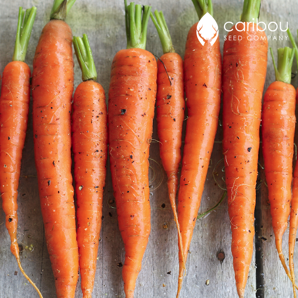 carrot - Caribou Seed Company
