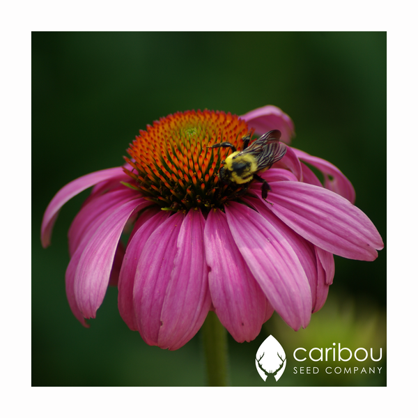 perennially yours garden kit - Caribou Seed Company