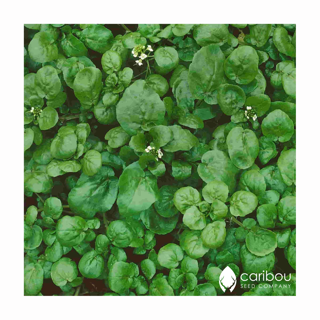 watercress - Caribou Seed Company