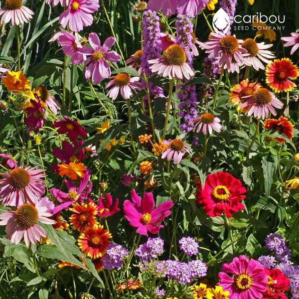 wildflower - monarch butterfly mix - Caribou Seed Company