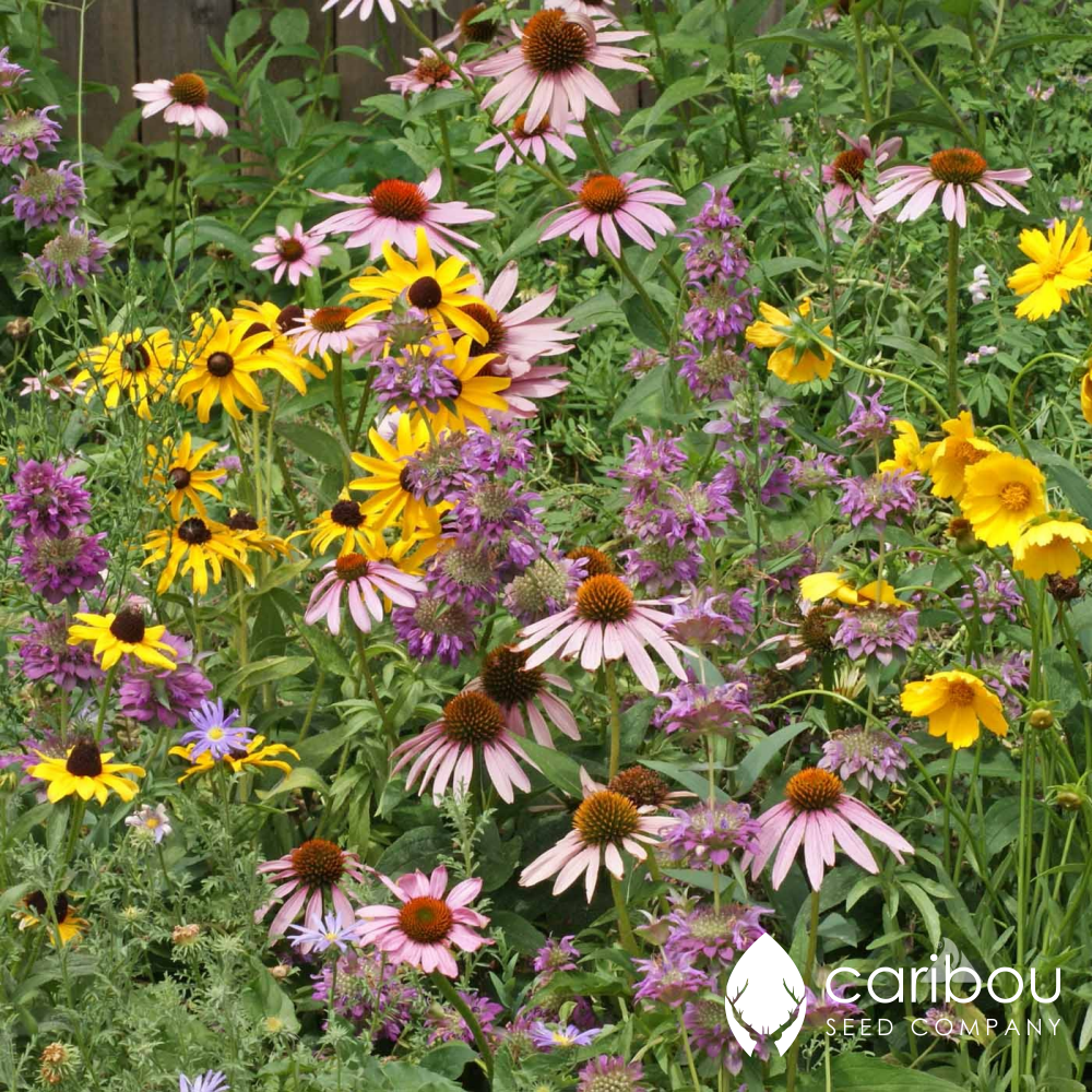 wildflower - bird & butterfly mix - Caribou Seed Company