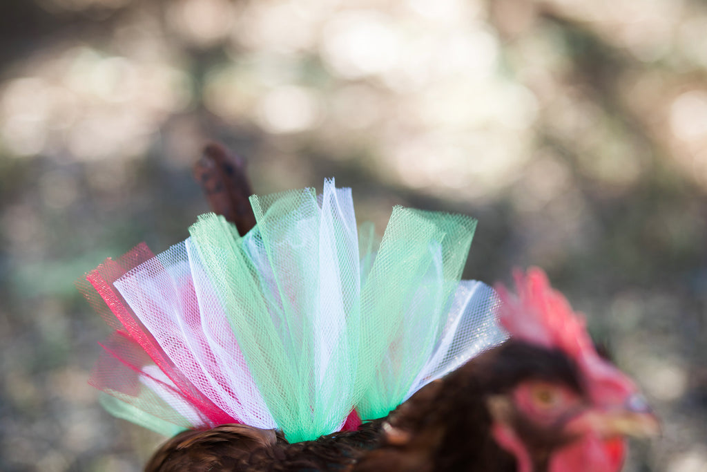 Christmas Chicken Tutu
