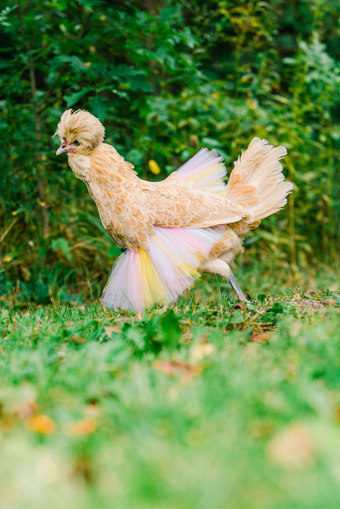 Lemonade Themed Chicken Tutu