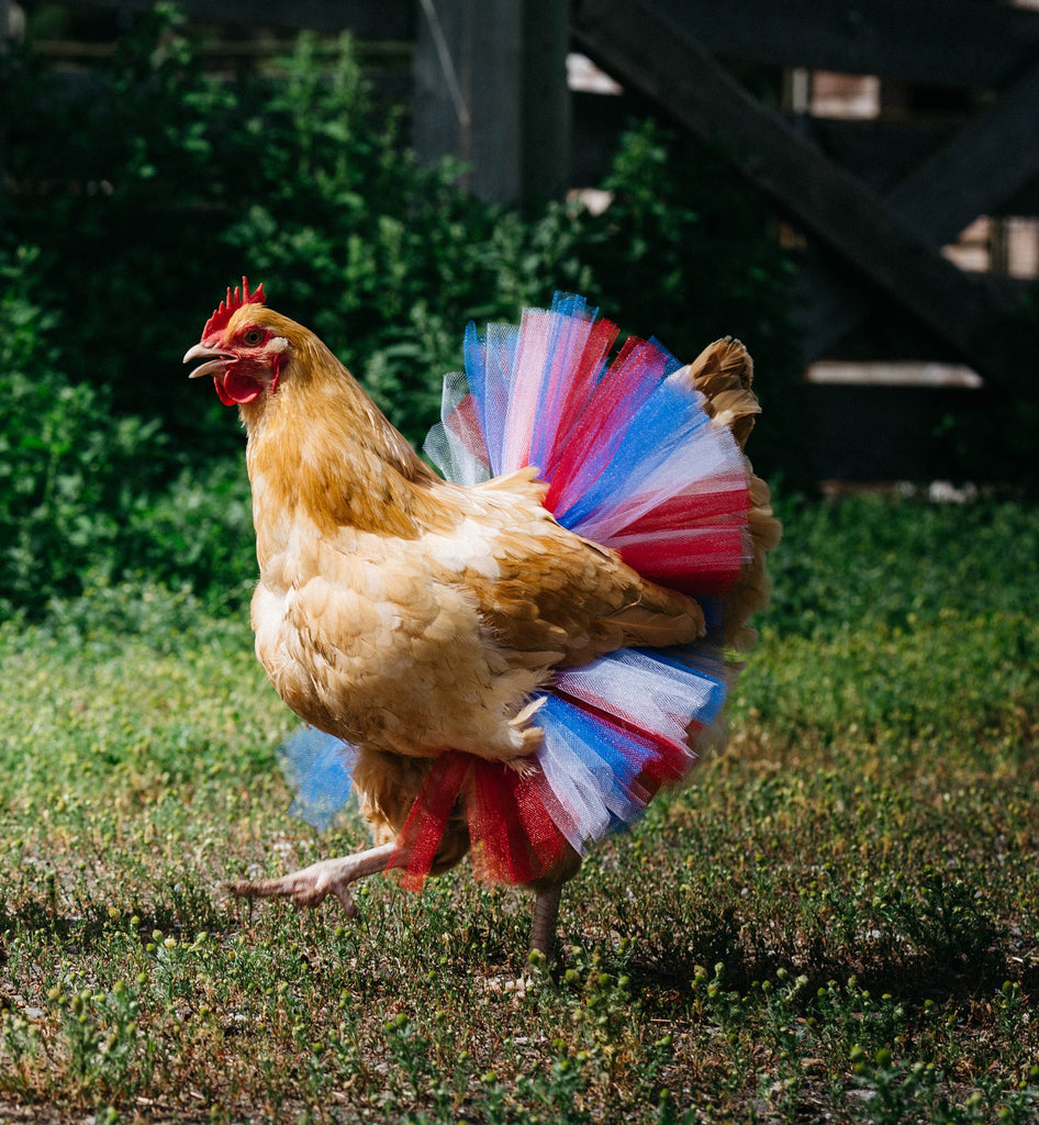 Patriotic Chicken Tutu