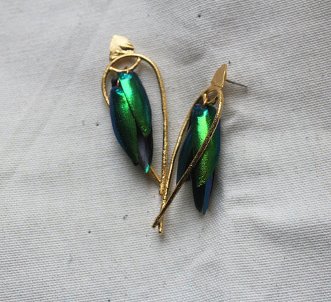 Arched Seasons - Enclosed Beetle Wing Earrings