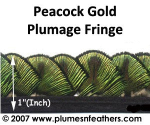 Peacock Gold Plumage Fringe