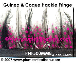 Guinea & Coque Hackle Fringe MM8
