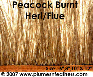 Peacock 'Burnt' Herl Fringe 10""