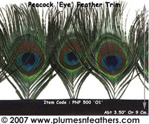 Peacock 'Eye' Feather Fringe I