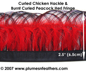 Burnt Curled Peacock Herl and Coque Hackle Fringe MM3