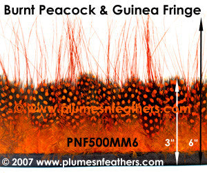Burnt Peacock & Guinea Fringe MM6
