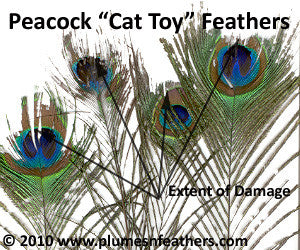 "Cat Toy Peacock Feathers 40""/50"""