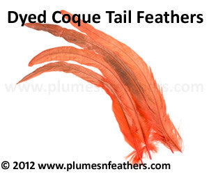 "Coque Tail Bleached Dyed 10""/12"" 10 Pcs."