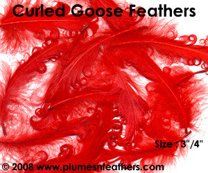 "Curled Goose Feather Packs 3""/4"""