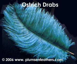 "Dyed Ostrich Drab Feather 19""/23"""