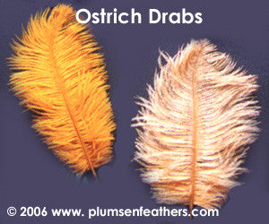 "Dyed Ostrich Drab Feather 8""/10"""