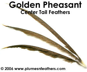 "Golden Nat. Center Tails 20""/30"""