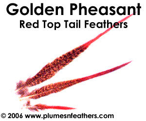 "Golden Nat. ""Redtop"" Tail 6""/8"""