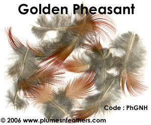 Golden Plumage 'A'
