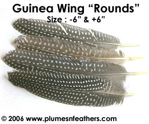 "Guinea Quill Rounds 6""/8"""