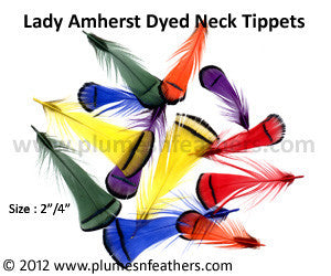Lady Amherst Plumage 'E' Dyed
