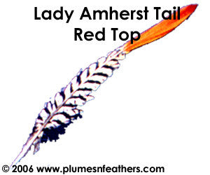 "Lady Amherst Nat. ""Redtop"" Tail 8""/10"""