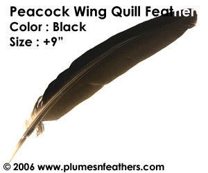 "Peacock Black Wing Quills 9""/14"""