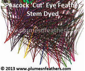 Stem Dyed Peacock Eye Only (Cutmoon) 12""