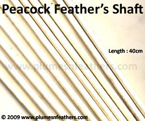 Stripped Peacock Feather Shaft 6.3