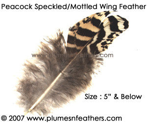 "Peacock Mottled Wing Quills 3""/5"""