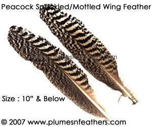 "Peacock Mottled Wing Quills 5""/10"""