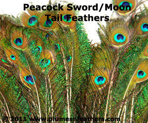 "Nat. Peacock Sword Moon 10""/20"""