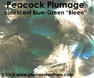 Blue/Green (Bleen) Plumage (Iridescent) 25 Pieces