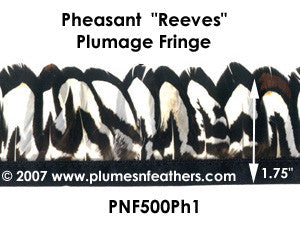 PH1 Pheasant Reeves Fringe