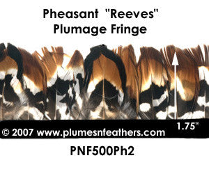 PH2 Pheasant Reeves Fringe