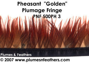 Ph3 Pheasant Golden Fringe