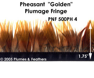 PH4 Pheasant Golden Fringe